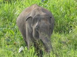 Safari Eléphant