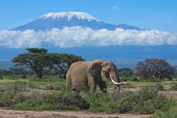 Kenya Finest Tours & Safaris - Day Tours