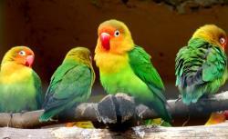 Bosphorus Zoo