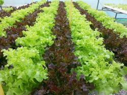 Daily Fresh Farm - Organic Farm Hydroponic Technology