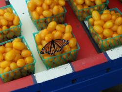 Beautiful Butterfly that loves Fruit Acres too!