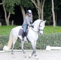 B Equestrian