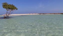 mangrovie El Quulan