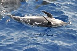 Whalewatchandora