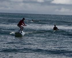 Blue Seas Surfing School