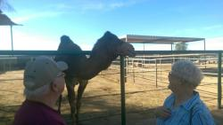 The Camel Farm