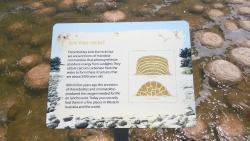 Thrombolites of Lake Clifton