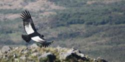 Valle de los Condores