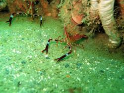 Ushuaia Divers