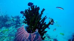 Blue Corals Dive
