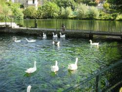 Lago dei Cigni
