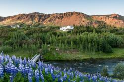 Icelands Guesthouse