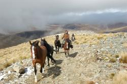 Adventure Horse Trekking N.Z Ltd