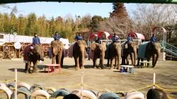 Ichihara Elephant Kingdom
