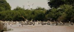 SVC野生动物保护区