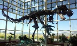 Natural History Museum - Western Wyoming Community College