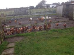 Smithy Farm