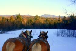 Country Dreams Farm