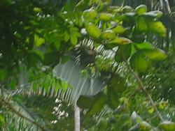 Parque Ecologico do Municipio de Belem
