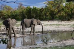 Elelphants we walked up to