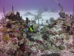 Special D Diving