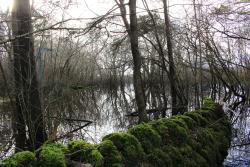 Coole-Garryland Nature Reserve