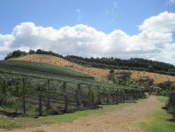 Stonyridge Vineyard