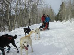Jackson Hole s Continental Divide Dog Sled Adventures - Day Tours