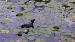 格林尼治半岛生态公园