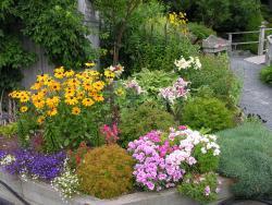 MUN Botanical Garden