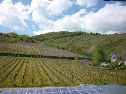 Weingut Brennerei Gastehaus Dauns