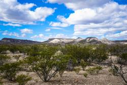Rock Hunting in the Big Bend of Texas with Teri Smith