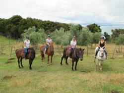 Waiheke Horse Tours