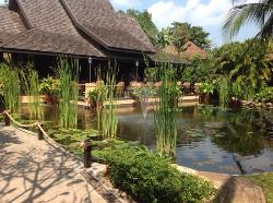 Beautiful lily pond on stroll down to pool and beach
