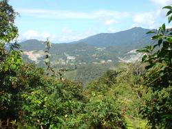 Cameron Highlands Trail No. 5 and 7