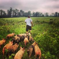 Mace Chasm Farm