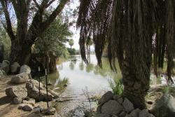 Yuma Conservation Garden