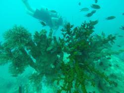 Go Dive Cambodia