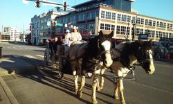 Cumberland Carriage Tours