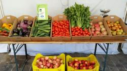"""Terra e Vita"":Coop.Sociale Agricola e Agriturismo"