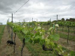 Kingsdale Wines