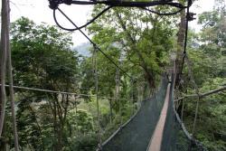 FRIM Canopy Walk