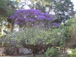 Beautiful Trees on Site