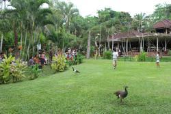 吉隆坡鸟禽公园