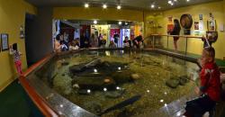Drobak Akvarium - Oslofjorden Marinbiologiske Senter