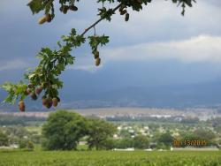 Overlooking the Paarl valley