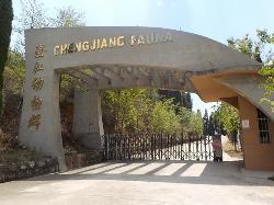 Chengjiang Fossils
