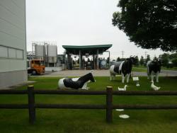 Meiji Milk kan