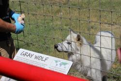 Animal World and Snake Farm Zoo