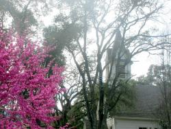 Woodside Library & Native Plant Garden